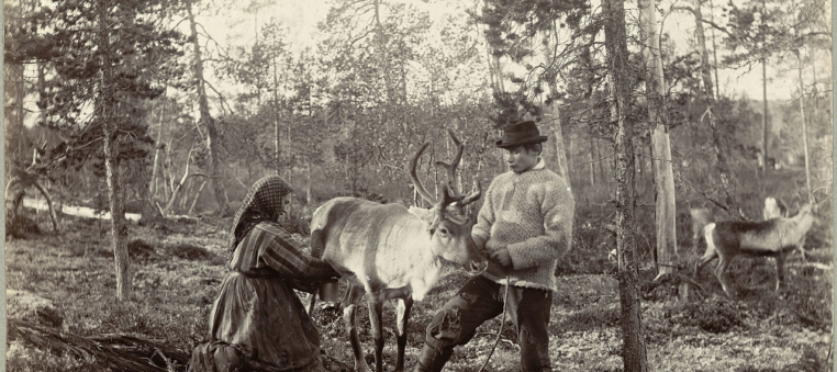 Melking Av Reinsdyr  Milking Reindeer 19306843299 2